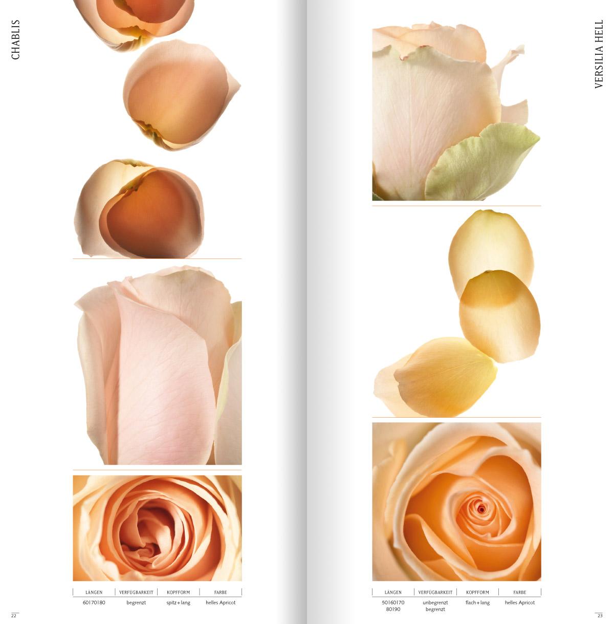 rosen3